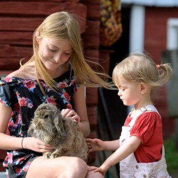 Lapset hoitaa eläimiä maatilalla, Maatilamatkailu Ilomäki, Seinäjoki